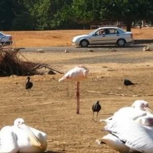 Отдых с детьми — Сафари зоопарк в Рамат-Гане