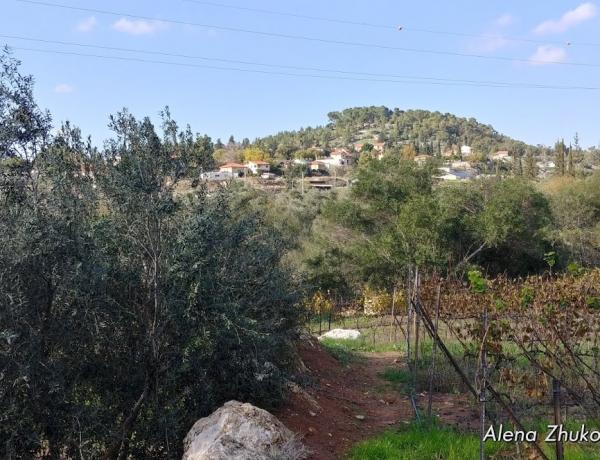 Экскурсия вокруг Иерусалима (Крестоносцы в Иудейских горах)